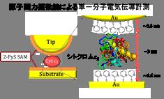 単一分子測定の図